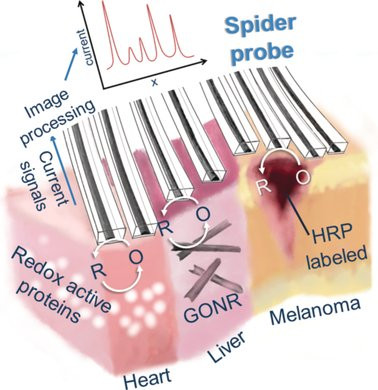 Soft Electrochemical Probes for Mapping the Distribution of Biomarkers and Injected Nanomaterials in