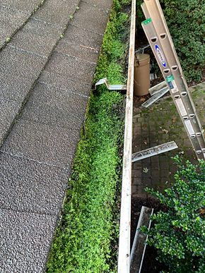 Unmaintained gutters leading to growth in the gutters. Need professioanal gutter cleaning service to remove from gutters.