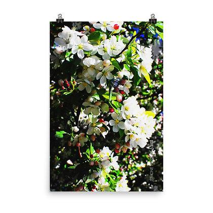 Blossoms Print