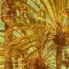 Golden-Palms-web.jpg