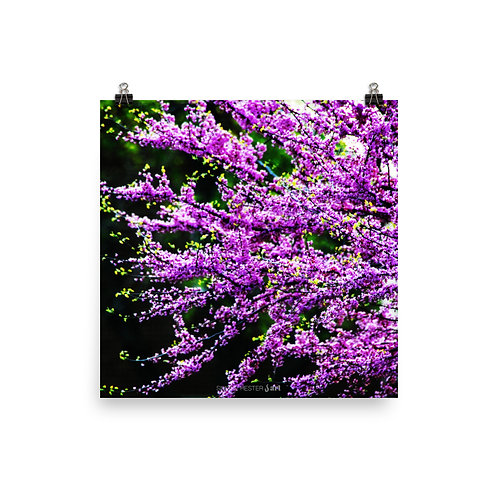 Purple Blossoms Print