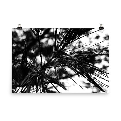 Feathered Pine Print