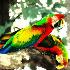 Deux Perroquets