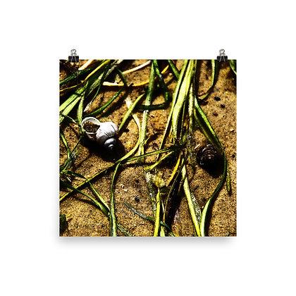 Shells and Grass Print