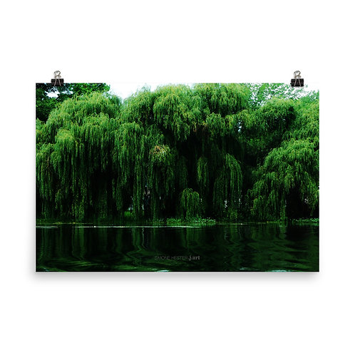 Willows Weeping Print