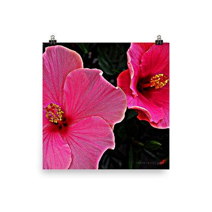 Pink Hibiscus Print