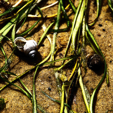 Shells and Grass