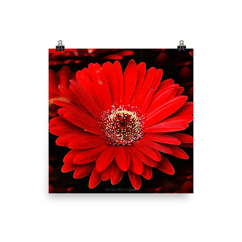 Red Daisy Print