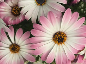 The pink flowers colour palette