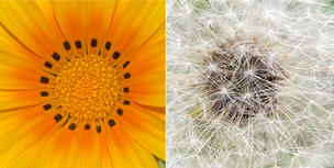 Flower closeups. Beautiful patterns.