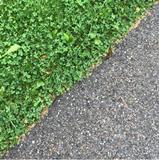 Soft grass, hard road
