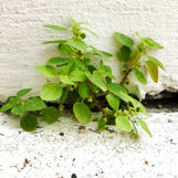 Plant in a wall crack