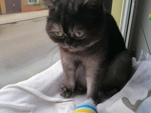 Ugly Cat Bean