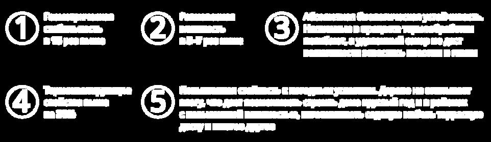 о термодереве-14.png