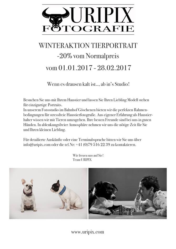 Winteraktion Haustierfotografie