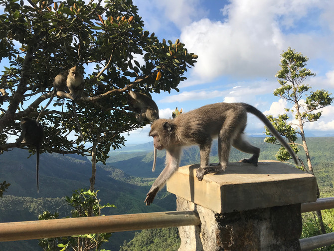 Black River Gorges Nationalpark - eine besondere Fotolocation