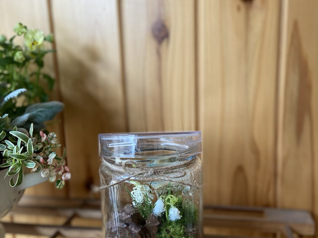 お迎えの苔やお花たち