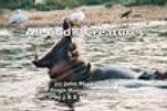All God's Creatures lyrics video