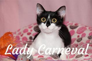 Lady Carneval_titulka.jpg