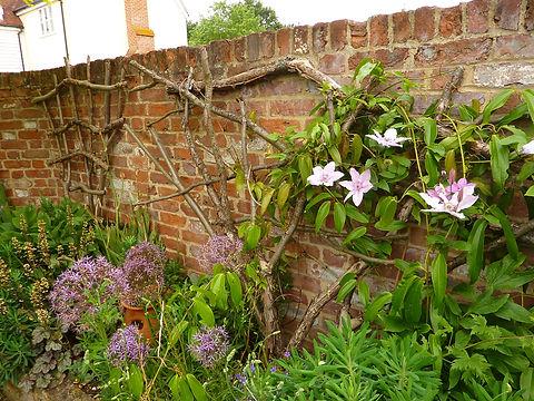 natural trellis, plant support, natural plant support, natural trellis