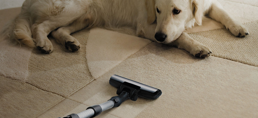 Carpet Clean And Fresh From Pets