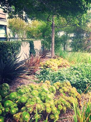 Low Water Rooftop Garden Private HOA