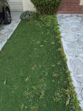 Artificial Turf - Not what we were hoping for...