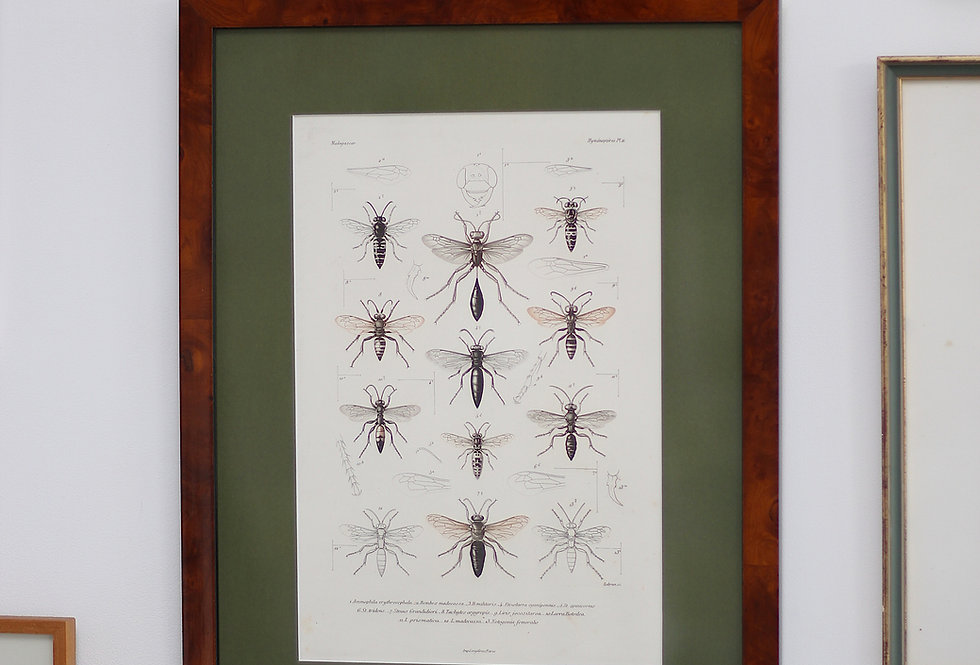 ANTIQUE IMPRINT BY GENY GROS, PARIS WITH INSECTS IN A VINTAGE FRAME