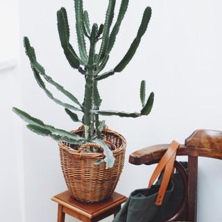 Vintage straw basket for plants