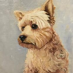 "Yorkshire Terrier portrait 8"" x 10"" oil on canvas #art #artbuyers #artlover #artforsale #yorkshirete"