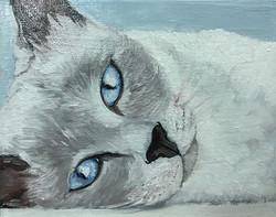 "Siamese cat, 8"" x 10"" oil on canvas #art #artlover #artforsale #siamese #oilpainting #siamesecat #pe"