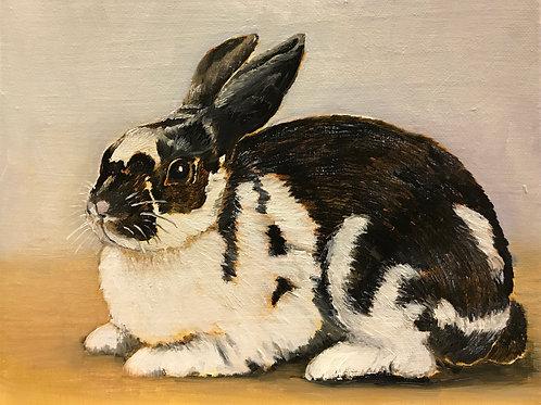 """Bunny 8"""" x 10"""" oil on canvas"""
