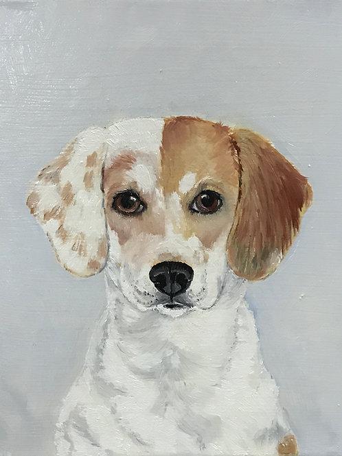 """Beagle 8"""" x 10"""" oil on canvas"""