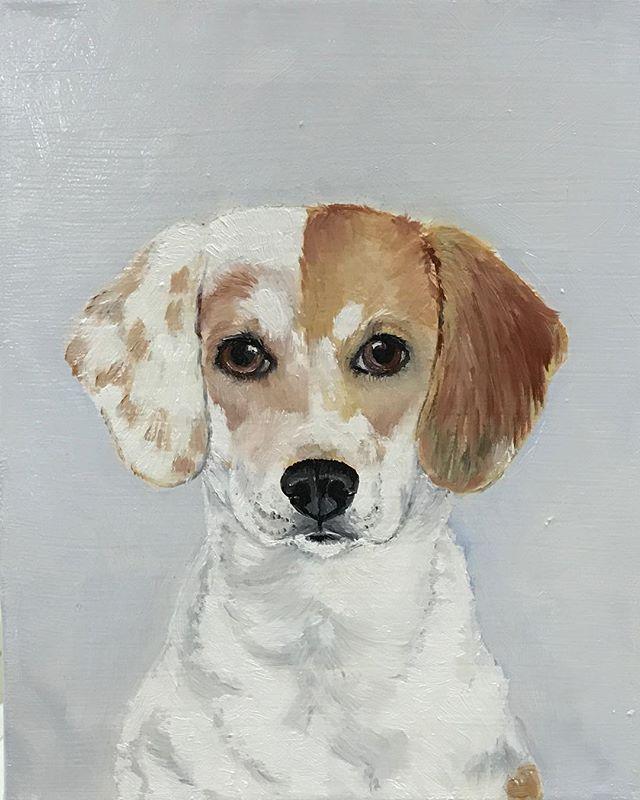 #art #artbuyers #artlover #artforsale #beagle #oilpainting #petportrait