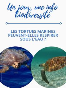 Les tortues marines peuvent-elles respirer sous l'eau ?