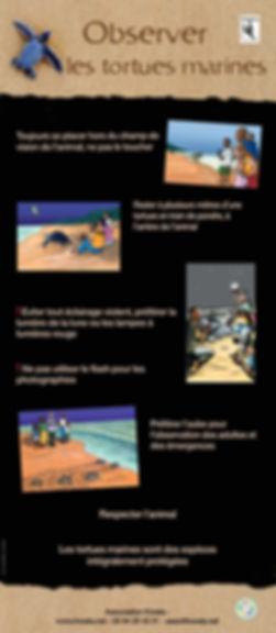 Kwata_Observer les tortues marines.jpg