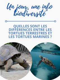 Quelles sont les différences entre les tortues terrestres et les tortues marines ?