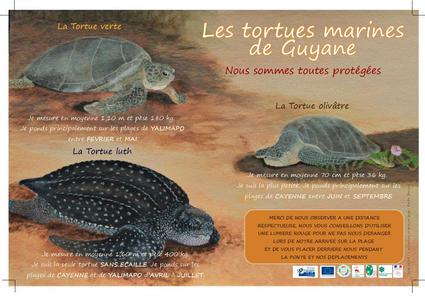 Poster tortues marines de Guyane