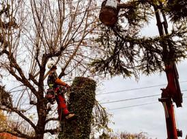 SARL TFS AUVERGNE RHONE ALPES TRAVAUX FORESTIER
