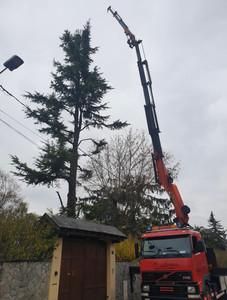 Elagage demontage arbres dangereux SARL TFS Auvergne Rhône Alpes