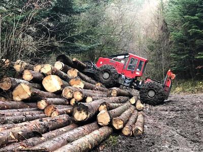 Elagage demontage arbres SARL TFS Auvergne Rhône Alpes