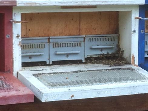 Entrées des ruches