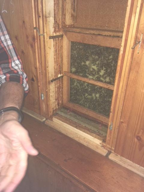 intérieur des abris de ruches Parc de Bâle