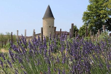 Le terroir du département fait partie intégrante de son patrimoine culturel. Les domaines viticoles sont donc des lieux exceptionnels à visiter en Gironde. Le Château Guiraud, par exemple, est l'un des plus beaux domaines viticoles de la région.  Depuis 1855, il est notamment spécialisé dans la production de vins de Sauternes. Ces grands crus, réputés dans le monde entier, comptent parmi les meilleurs cépages. En explorant son fabuleux édifice, vous pourrez d'ailleurs le déguster !