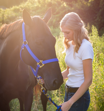 sunset-horse-photography.png