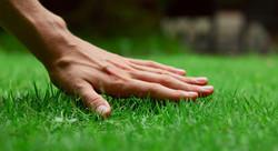hand touching turf.jpg