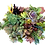 Thumbnail: 10 Succulent Cuttings