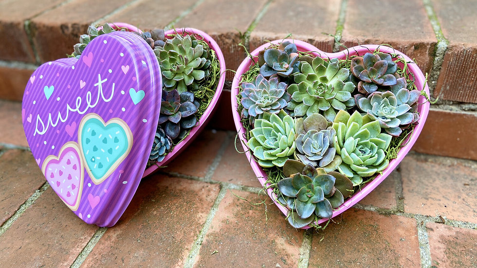 Heart Box of Succulents