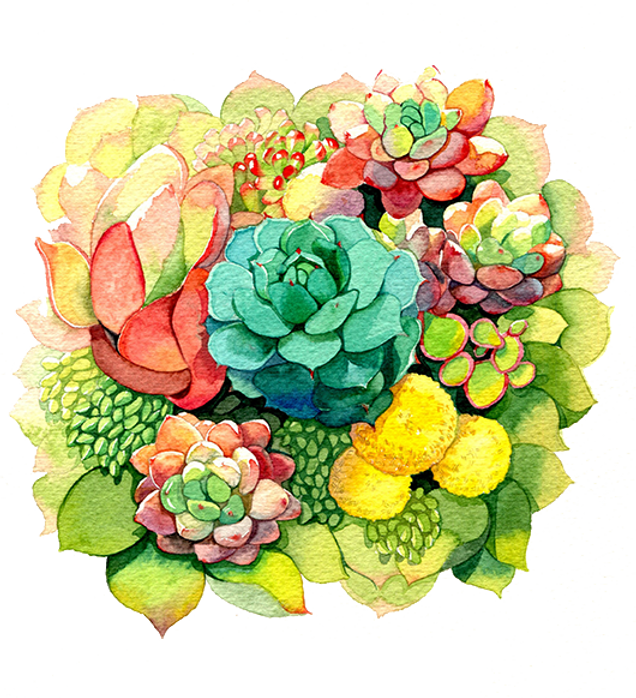 SoCalSucculents watercolor.png