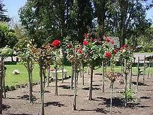 Rose scattering garden